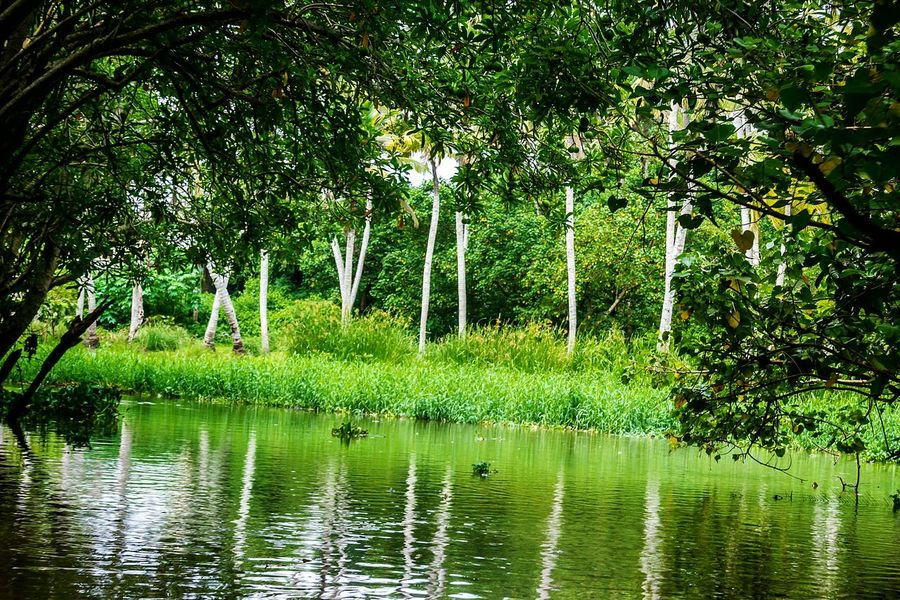 Lake Water Reflection Beauty In Nature Tree Tranquil Scene Tranquility Scenics Day Forest Outdoors Branch Green Color Nature Growth No People Backwaters Mangrove Forest Backwaters Of Kerala Poovar The Week On EyeEm Keraladiaries EyeEm Nature Lover EyeEm Gallery