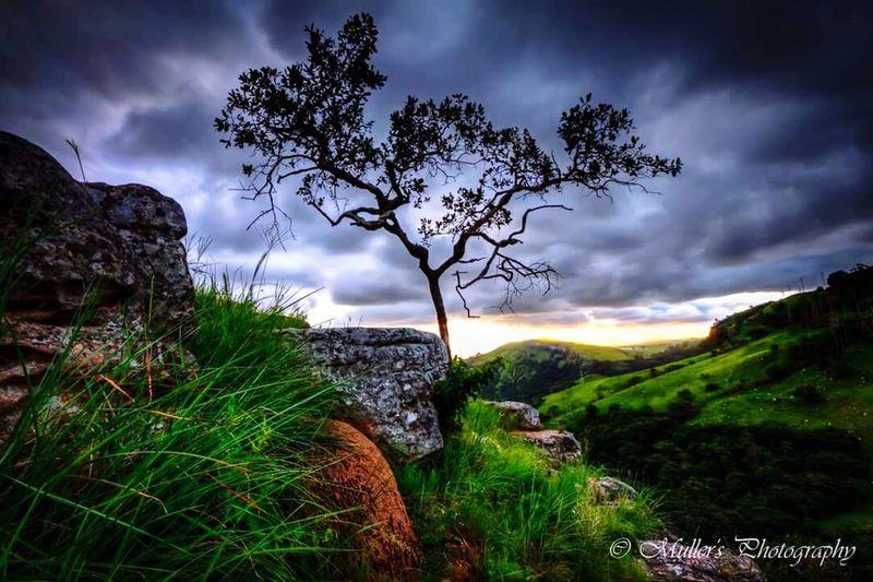 Sunset Good Night World Hugging A Tree NatureReserve Cliffs Enjoying The Sun