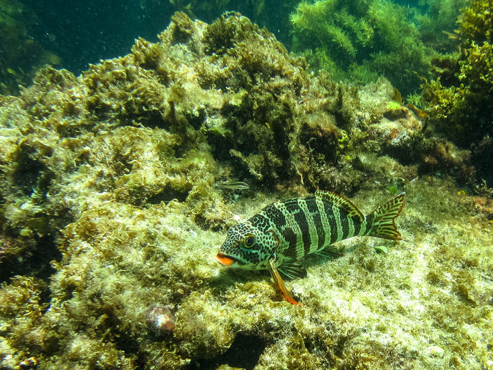 Animal Themes Animal Wildlife Animals In The Wild Coral Coral Trout Day High Angle View Nature No People One Animal Outdoors Sea Sea Life UnderSea Underwater Water
