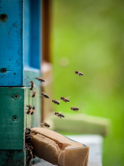 Bees flying by beehive