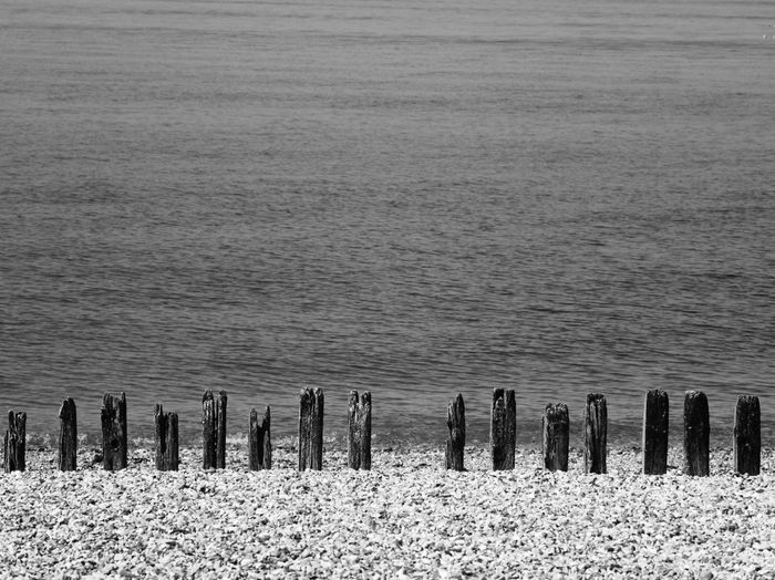 Wooden posts on field by sea