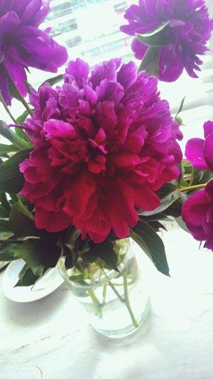 Flowers Purple First Eyeem Photo