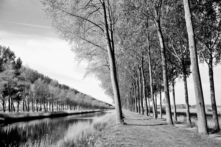 Bare Tree Beauty In Nature Day Diminishing Perspective Empty Footpath Growth In A Row Landscape Long Narrow Nature No People Non-urban Scene Outdoors Scenics Sky The Way Forward Tranquil Scene Tranquility Tree Tree Trunk Treelined Vanishing Point Walkway
