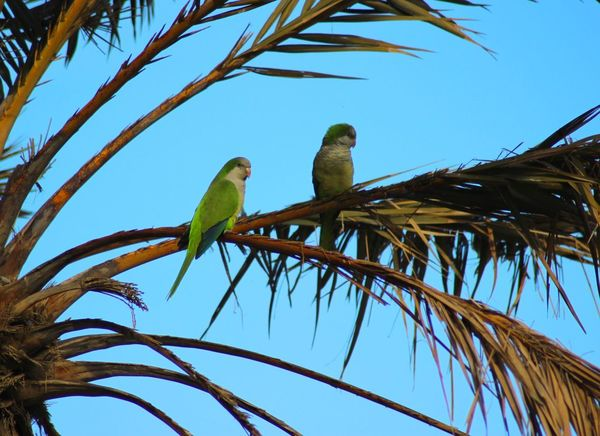 Malaga Málaga,España Animal Themes Animal Wildlife Animals In The Wild Beauty In Nature Bird Blue Branch Clear Sky Day Gold And Blue Macaw Low Angle View Macaw Nature No People Outdoors Parrot Parrots Perching Sky Tree Two Animals