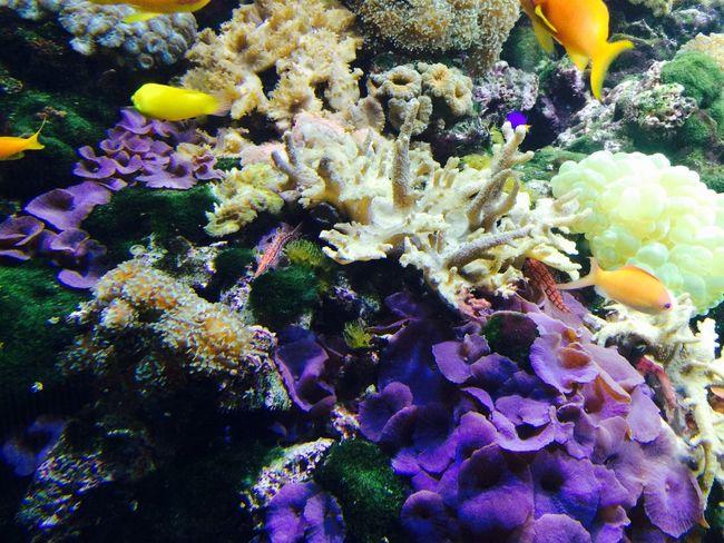 Coral Aquarium Life Vivid Vivid Colours