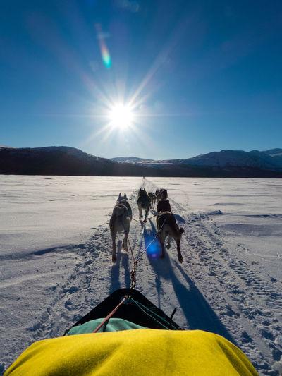 Sledding On Snow Covered Landscape Against Sky