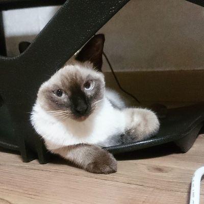 . . 훗 한심한 닝겐.. 이라고 하는 표정 같다.. . . . 일상 고양이 고냥이 고양이그램 고양이스타그램 고냥이그램 고냥이스타그램 cat cute 샴 샴고양이 냥 냥이 냐옹이 냐옹냐옹 냐옹스타그램