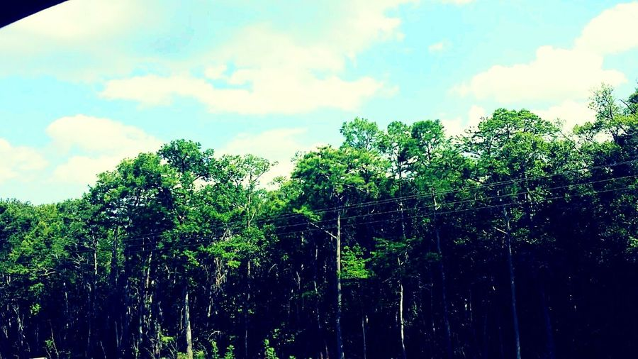 Tree Sky Road Side View Forest