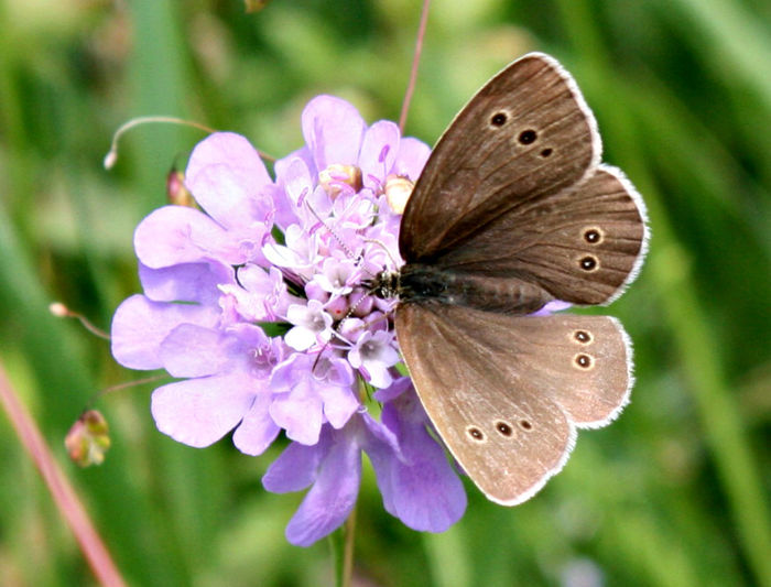 Beauty In Nature Butterfly - Insect Close-up Flower Flower Head Focus On Foreground Fragility Insect No People Pink Color Purple Symbiotic Relationship