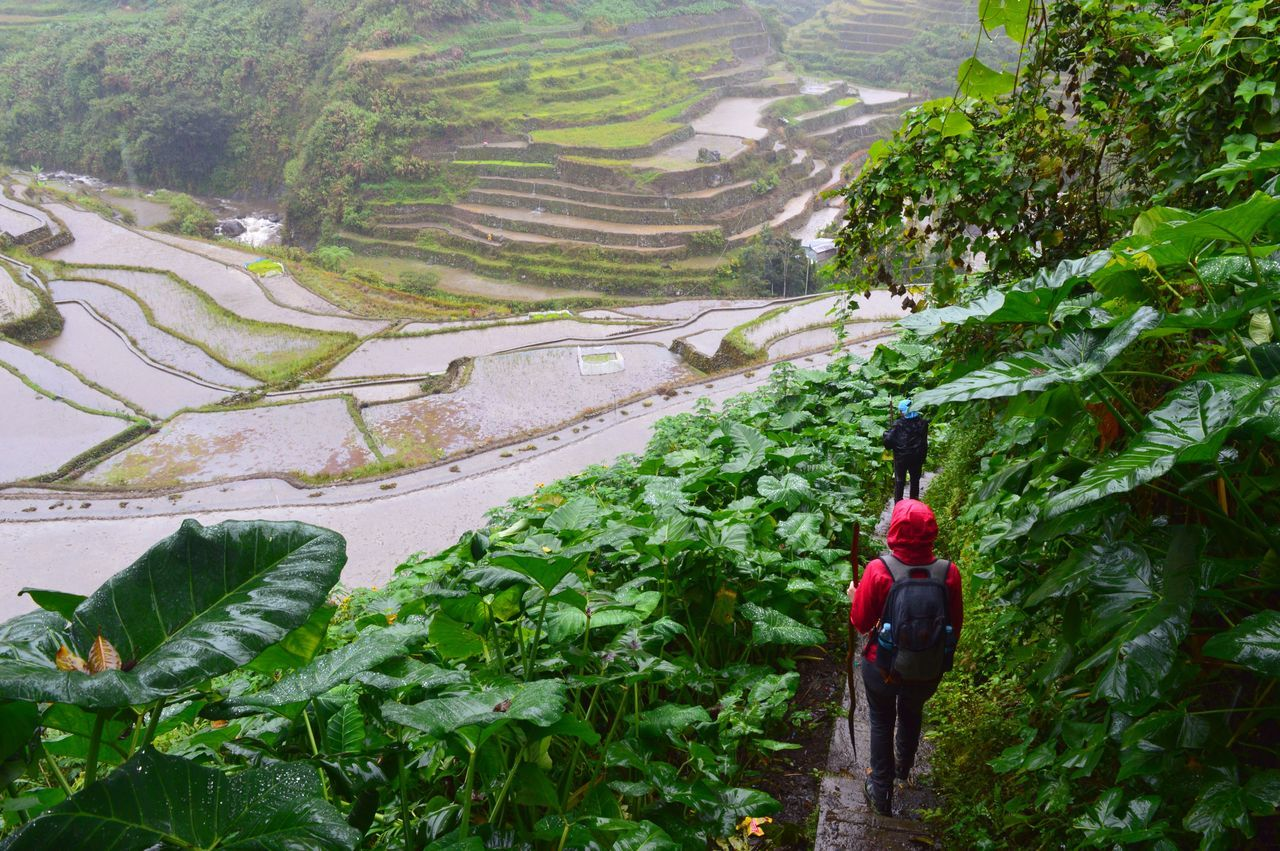 Rear view of hikers standing on footpath in front of terraced field