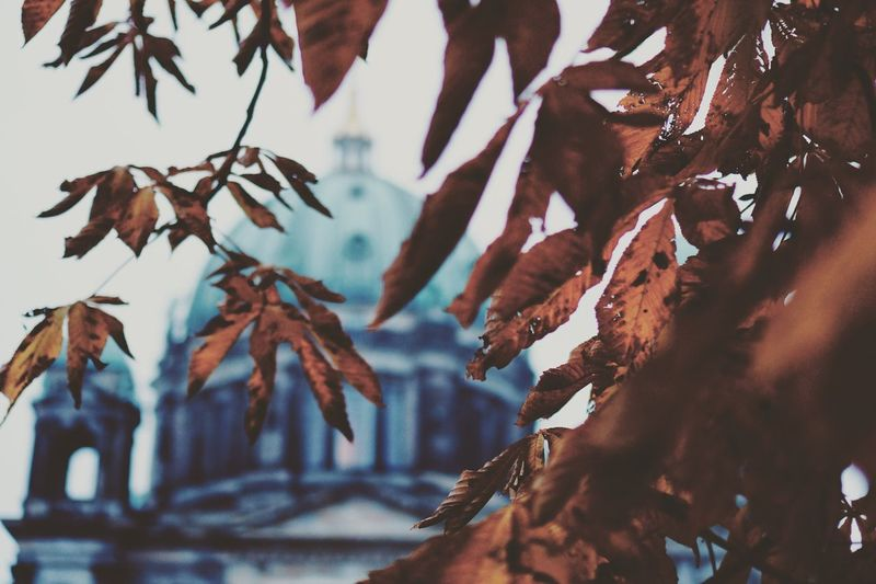 Low angle view of autumn tree against berlin cathedral