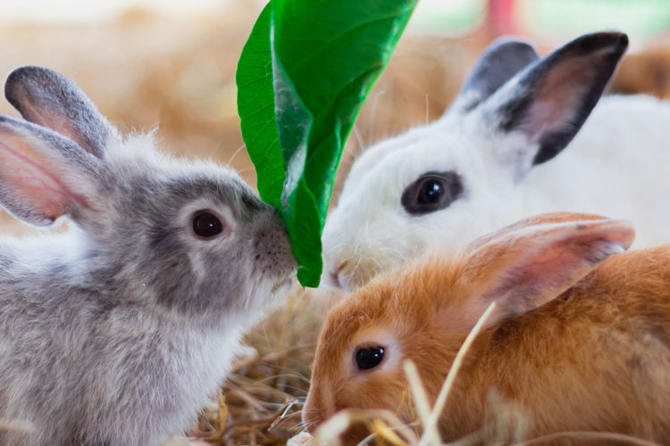 3 cute rabbits