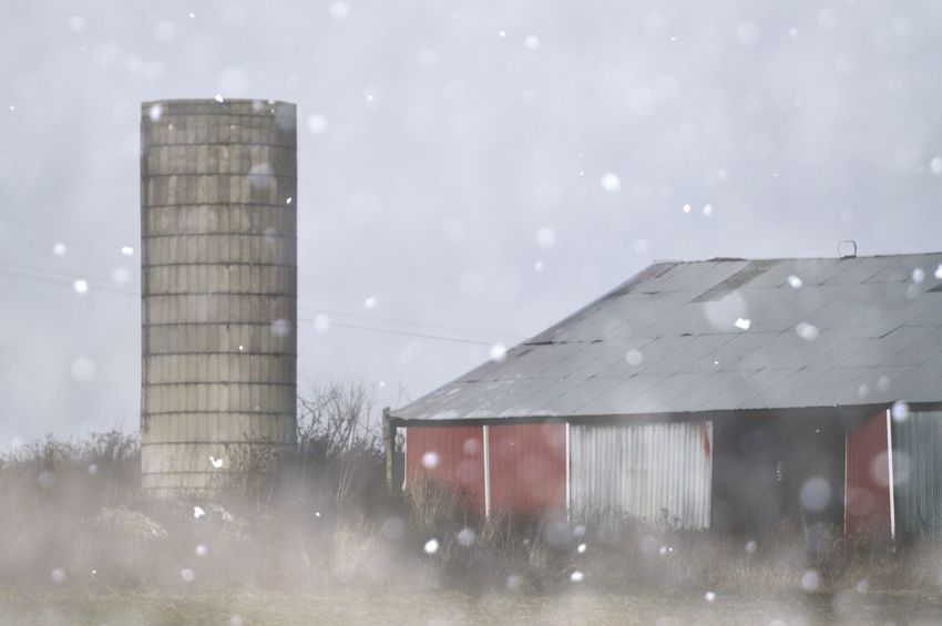 Winter on the farm Architecture Built Structure Sky Building Exterior No People Illuminated Day Outdoors Nature Farm Snowing Snow Winter Winter On The Farm Red Barn Barn Winter Wonderland Dilapidated Snowy Snowy Days... Winter Landscape Farmland