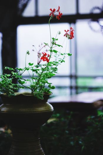 Growth Plant Flower Potted Plant Fragility Nature Close-up Focus On Foreground Day No People Window Beauty In Nature Indoors  Freshness I Want To Know Your Secret, C I Always Thinking About U, G Thank You,❤️ Thankyou 감사합니다