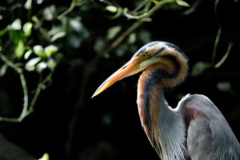 Close-up of bird on tree