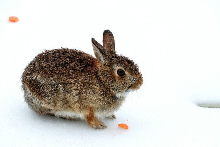My poor bunny during the ice storm from the other day Snow Backyard Photography Bunny  Ice Eating Frozen Nature Beauty In Nature White Background Animal Themes Close-up Rabbit - Animal Visual Creativity The Great Outdoors - 2018 EyeEm Awards 10