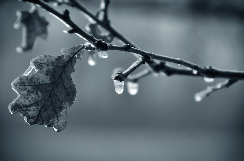 Close-up of ice on twig