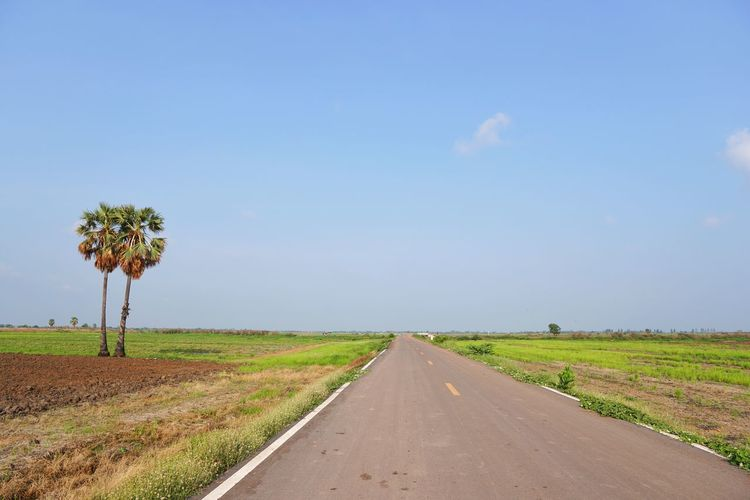 Street Sky Nature Lanscape Backgrounds Countryside Farm Land Field Sugar Palm Tree