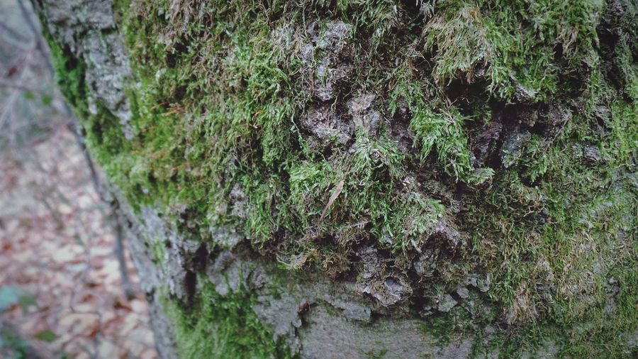 Tree Close-up Nature No People Tree Trunk Outdoors Textured  Growth Day Beauty In Nature Forest Photography Details Textures And Shapes Details Of Nature Background Photography Screensaver Shot Forest Adventure Macro Nature Details In Close Up Autumn Abstract Nature Moss Moss Covered Tree Mossy Trees Mossyforest Moss & Lichen