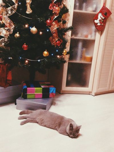 The Culture Of The Holidays One Animal Cat