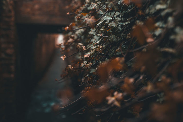 Dark Path....... Artist EyeEm Best Edits Autumn Beauty In Nature Branch Change Close-up Day Focus On Foreground Fragility Growth Land Leaf Nature No People Outdoors Plant Plant Part Scenics - Nature Selective Focus Tranquility Tree
