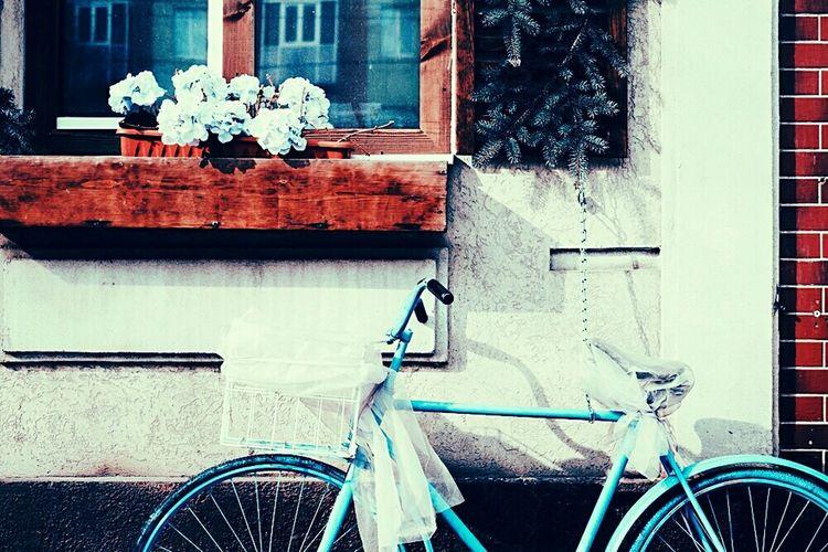 Bicycle Day Window Outdoors Retro Styled Land Vehicle Old-fashioned City Flower Streetphotography Street Teamfuji фотограф Россия Fuji Russia Fujifilm альметьевск Photographer VSCO Midifoto Vscocam