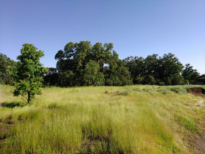 No Edit/no Filter Outdoors Green Color Beauty In Nature Oak Trees Roseville Ca Maidu Museum & Historic Site Smartphone Photography Smartphone Photographer From My Point Of View Rural California Nor Cal Tranquility Norcal Cali Life