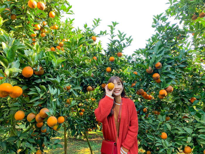Low angle view of orange fruits on tree