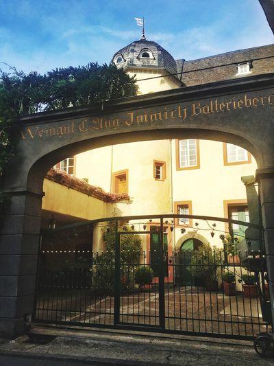Enkirch Walking Around Vineyard