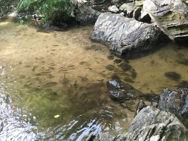Day High Angle View Nature No People Outdoors Rock - Object Water