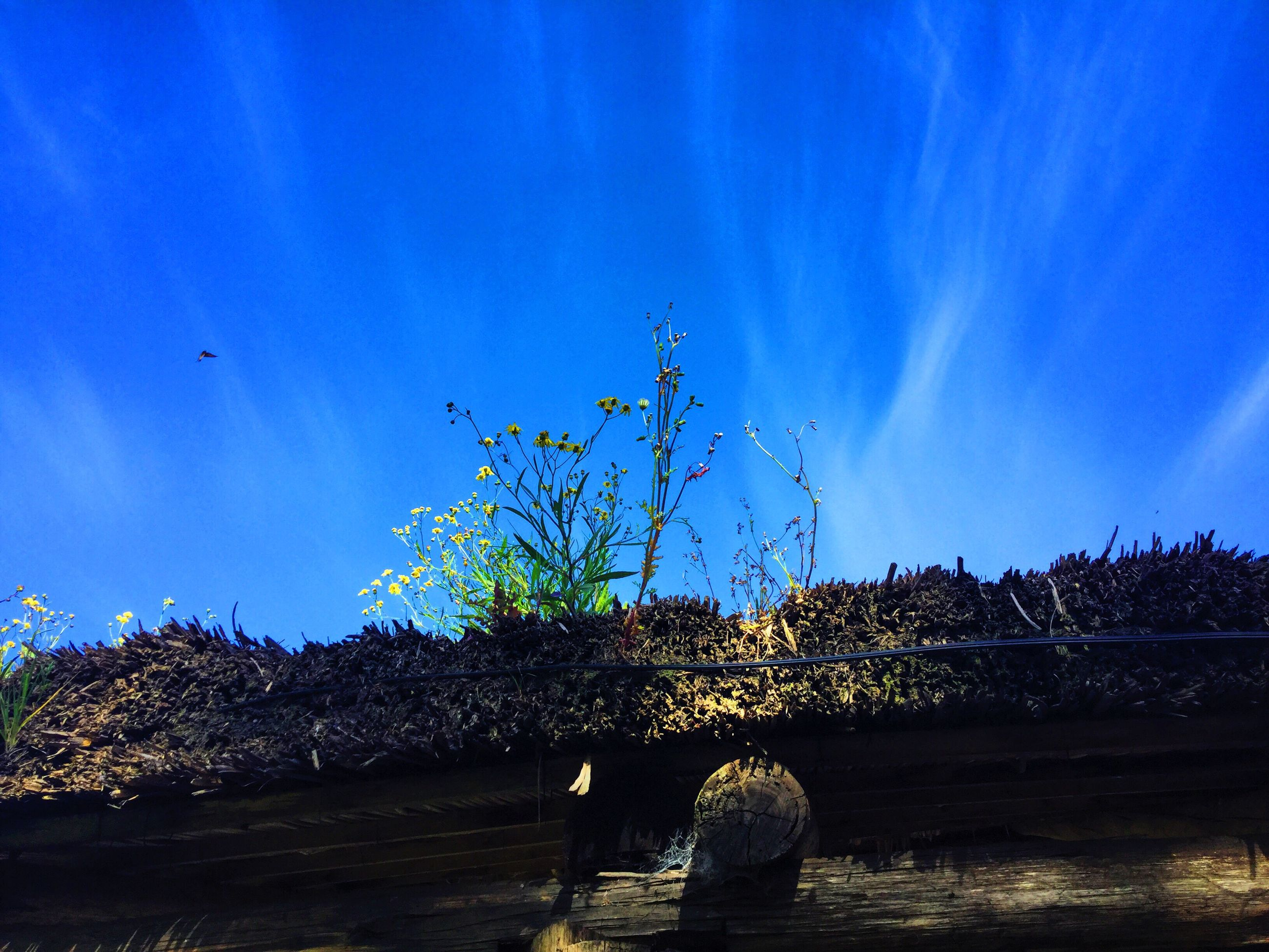 blue, low angle view, tranquility, sky, tranquil scene, nature, growth, plant, scenics, sunbeam, day, outdoors, non-urban scene, beauty in nature, distant, tourism
