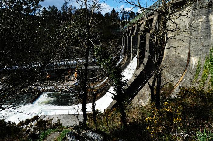 Fervenza Dumbia Cascada Waterfall Trees Galicia
