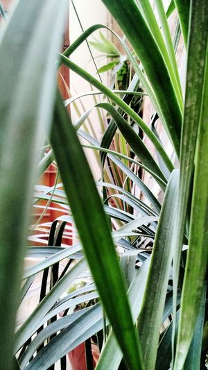 Plant Growth Nature Green Color No People Aloe Outdoors Close-up Beauty In Nature Cactus Day Flowers, Nature And Beauty Plant Nature Green Color EyeEmNewHere Leaf Tree Weathered Follow Me On Instagram (nabeel26abid)