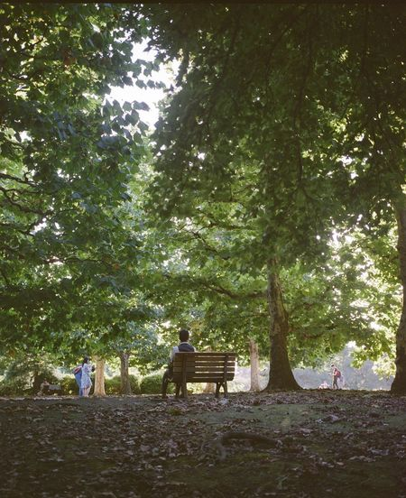 Tree Plant Group Of People Men Nature Women Adult Day Bench People Land Seat Forest Sitting Tree Trunk Togetherness Trunk Real People Park Outdoors Couple - Relationship The Street Photographer - 2019 EyeEm Awards