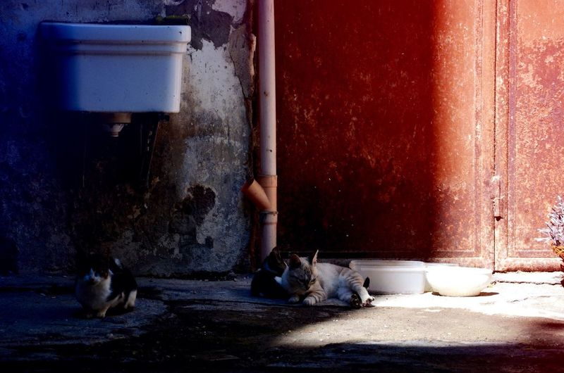 Cats Resting Besides Bowl Against Abandoned Building