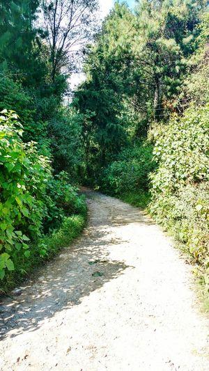 Camino de rocas