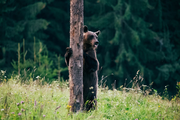 Low angle view of brown bear standing at tree trunk while looking away
