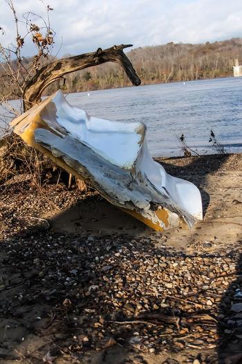 Ship Wreckage Ship Wreck Ohio River Water Sea Beach Bird Snow Cold Temperature Winter Sea Life UnderSea Whale