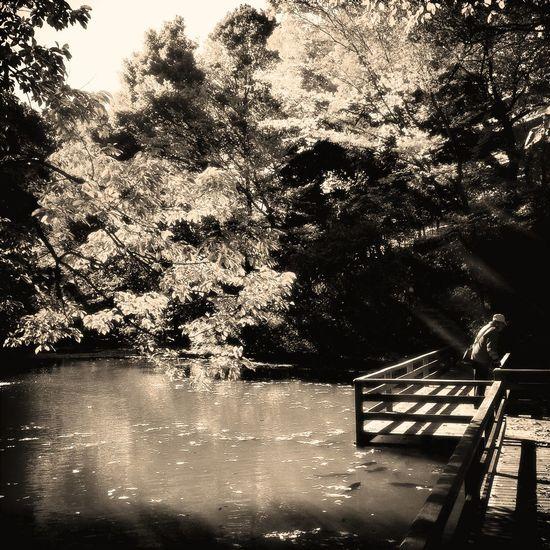 relaxing at 学習院大学 血洗いの池 Relaxing