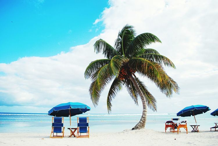 Folding chair and beach umbrella by palm tree on shore against sky