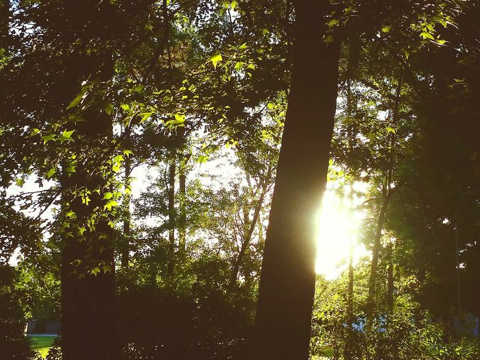 Suns peekaboo Outdoors Sun Sunshine Leaves First Eyeem Photo Trees Sunny
