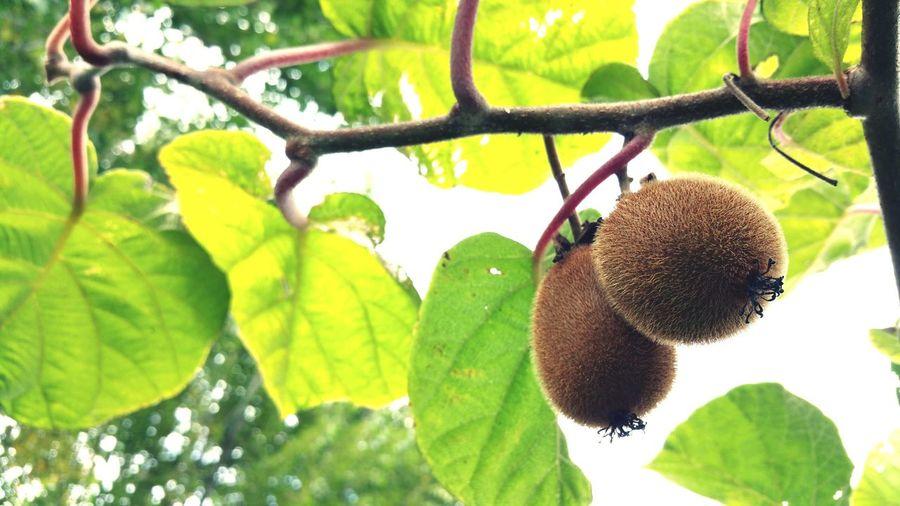 Nature Nature Photography Kiwi Kiwis