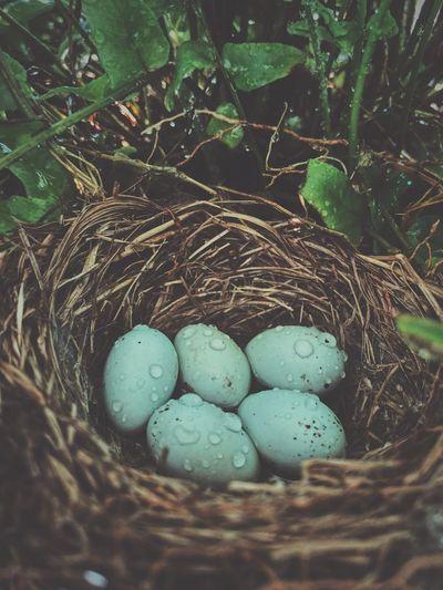 Eggs after rain