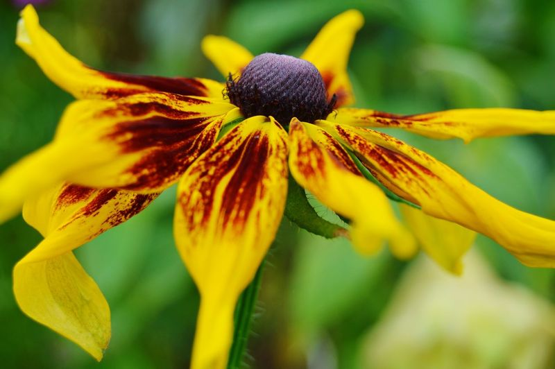 Flowers Flowers, Nature And Beauty Flower Photography Flowers,Plants & Garden Flowerphotography Beauty In Nature Nature Nature Photography Yellow Flower Flower Head Flower Yellow Petal Springtime Botany Close-up Plant Flowering Plant