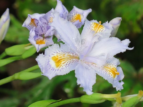Iris Flowers Flowers Beautiful Nature Flowers, Nature And Beauty Plant Photography Naturelover Botanical Garden Zuerich Tropical Flowers