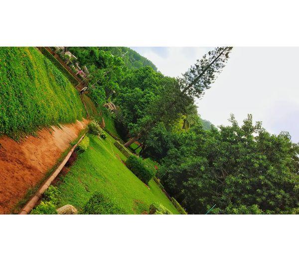 Garden Tirumala Hills Tirupati Balaji Temple Tirupati Balaji Tirumala Tirupati Devasthanams Greenery