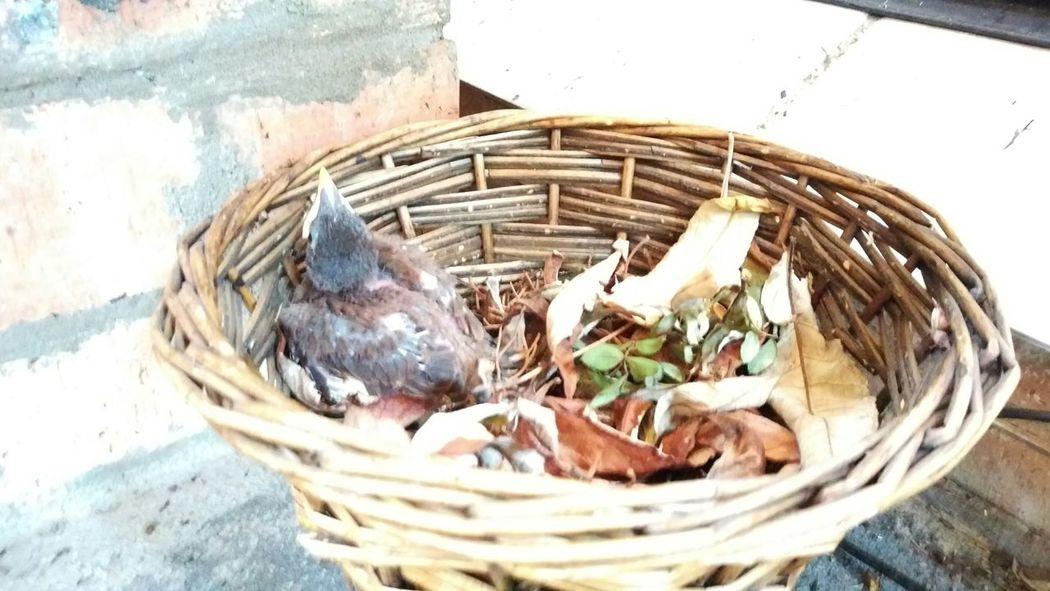 Bird Baby Bird Nest Saved Bird Just Chillin'