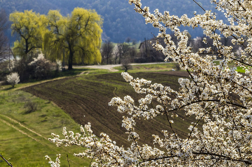 Beauty In Nature Blossom Branch Close-up Field Flower Freshness Grass Growth Landscape Nature No People Scenics Springtime Tranquility Tree