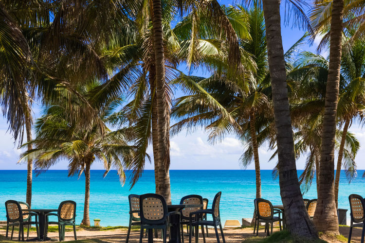 Empty chairs and palm trees at beach