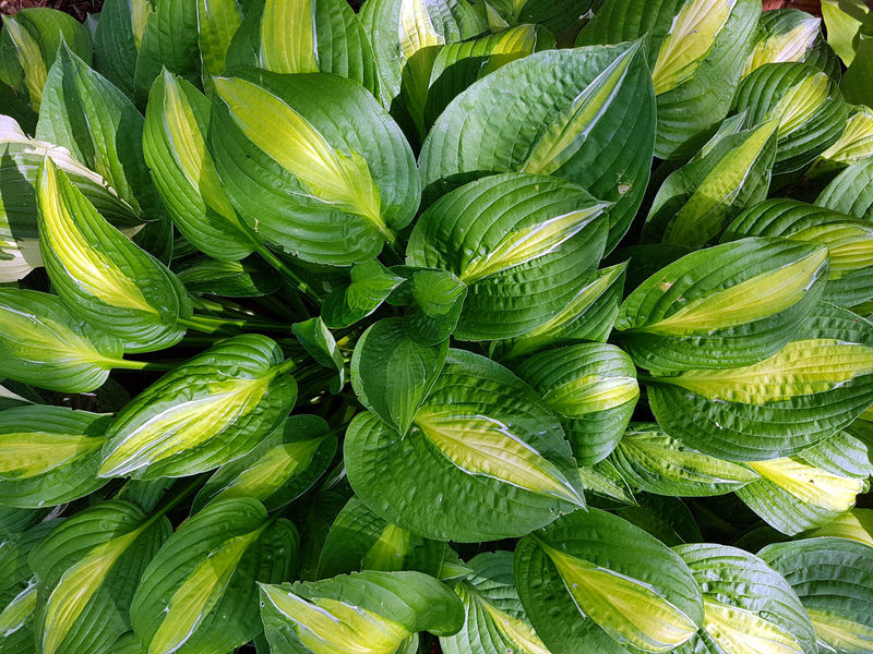 Tropical foliage Agriculture Backgrounds Close-up Day Food Food And Drink Freshness Full Frame Green Color Growth Healthy Eating Leaf Nature No People Outdoors Plant Supermarket Vegetable